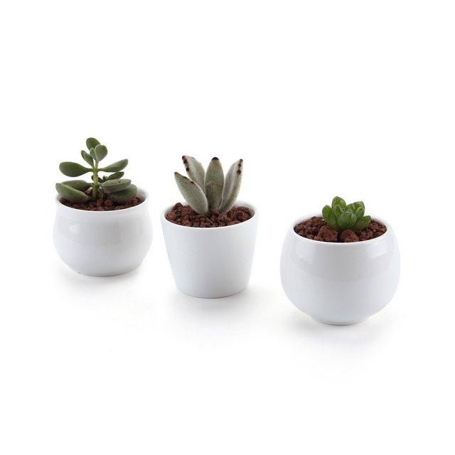 6577CM Set of 3 Gelato Serial ModerCeramica Vaso di Fiori Pianta Succulente Cactus Vaso di Fiori Giardino i vasi di Fiori vasi di Piante