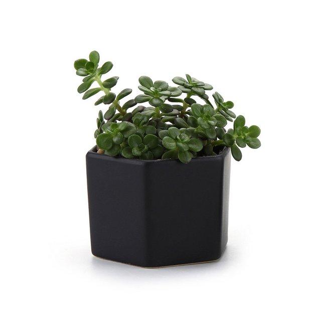 72CM Esagono Lucida SUPERFICIECeramica Vaso di Fiori Pianta Succulente Cactus Vaso di Fiori Giardino i vasi di Fiori vasi di Piante