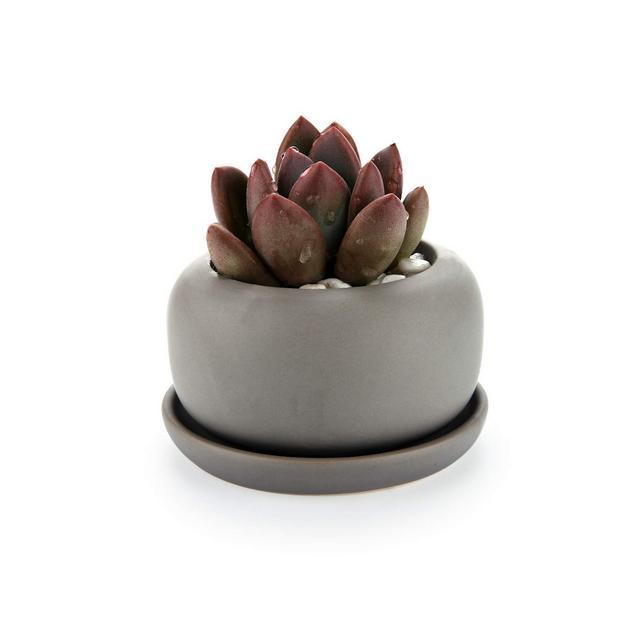 Vasetti per Piantine Ceramica con Vassoio Set di 1 Piccola Vasi in Ceramica Grigia per Piante Grasse da Interno Vasi Cactus per Succulente Piccoli