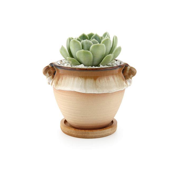 Vasetti per Piantine Ceramica con Vassoio di bambù Set di 1 Piccola Vasi in Ceramica per Piante Grasse da Interno Vasi Cactus per Succulente Piccoli