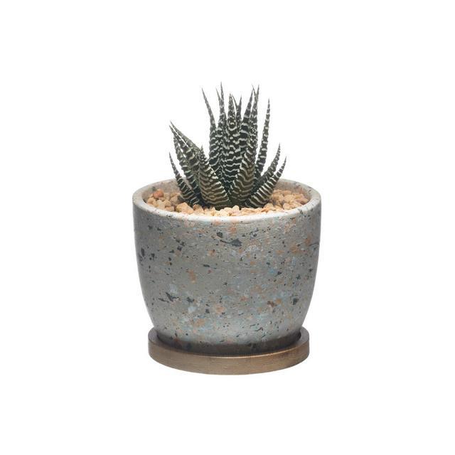 Vaso di Cactus Succulente in Cemento Contenitore per Finestra in Vaso di Fioriera in Cemento con Vassoio in Bambù per Dreggio per la Decorazione Domestica Set di 1Grigio