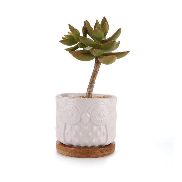 Vassoio Bianco Decorazione Ceramica Owl Succulente Planter Pot Set con Free bambù Desktop davanzale Bonsai Pots