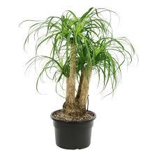 piante_da_salotto